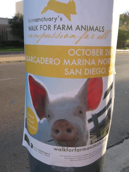 animal rights poster features cute pig