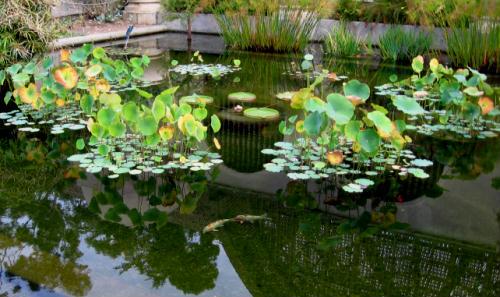 bright color in balboa park lily pond
