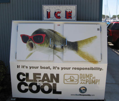 cool fish wears red sunglasses