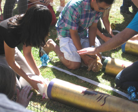 rabbits ready to tube race at bunnyfest
