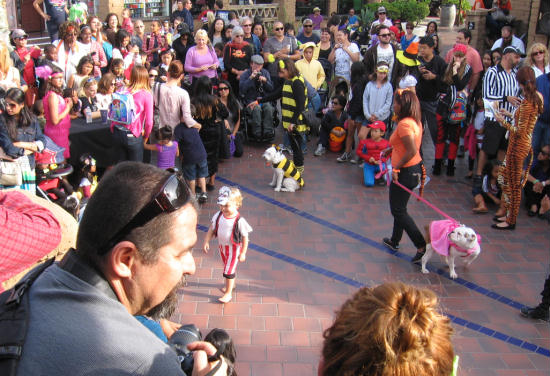 kids and dogs in costume at seaport village