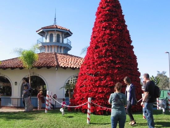 Poinsettia Christmas tree by Seaport Village carousel.