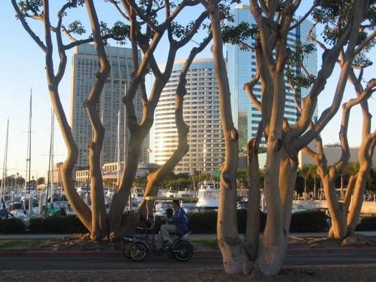 San Diego bayfront hotels seen through trees.