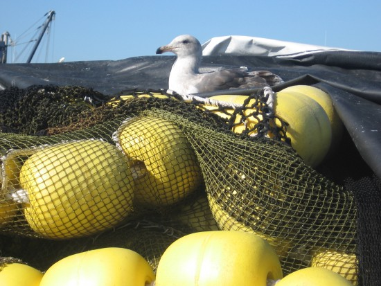 Gull relaxes atop pile of yellow floats on pier.