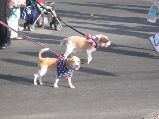 Pooches with American flag bandanas.
