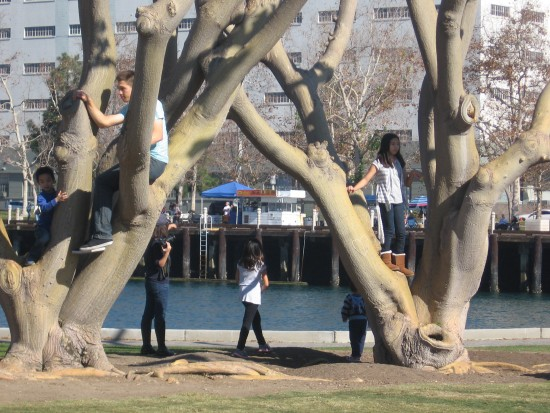 Kids climb in trees near Greatest Generation Walk.