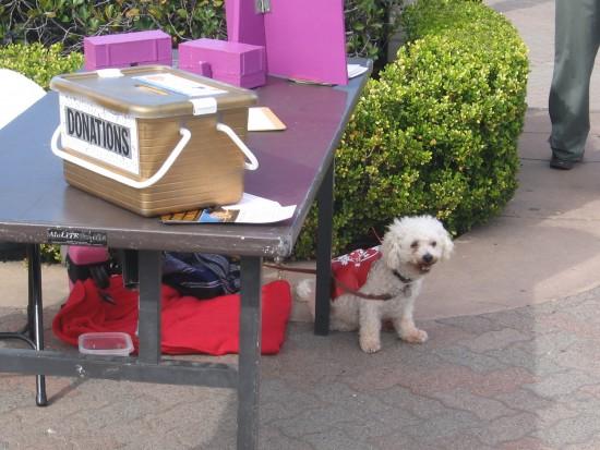 Friendly pooch near Spreckels Organ Society donation box.