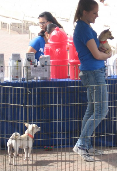 Lovable dogs await adoption at Bark in the Park.