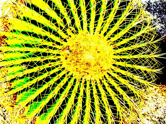 Barrel cactus photo with super high contrast applied.
