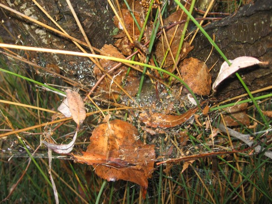 Rain on fallen leaves, a spider's web and stems.