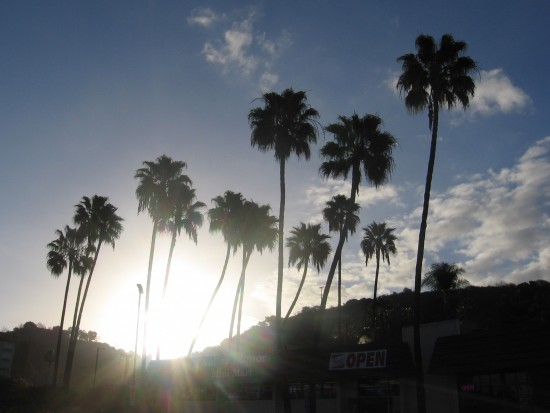 Sun rises between palm trees above Mission Valley Resort.
