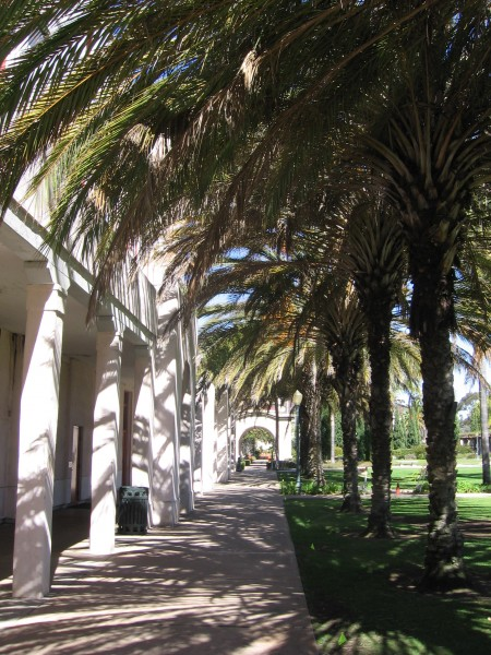 Palm trees line courtyard behind Balboa Park's Administrative Building.