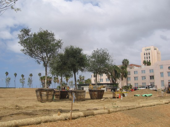 Trees ready for planting in new park on Embarcadero.