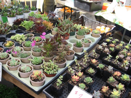 Lots of colorful tiny cacti and succulents.