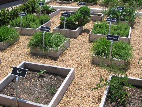 This herb garden is used for the hotel restaurant.