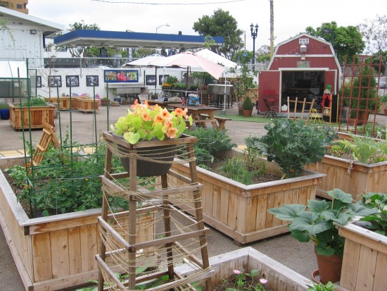 An educational community garden in the concrete jungle.