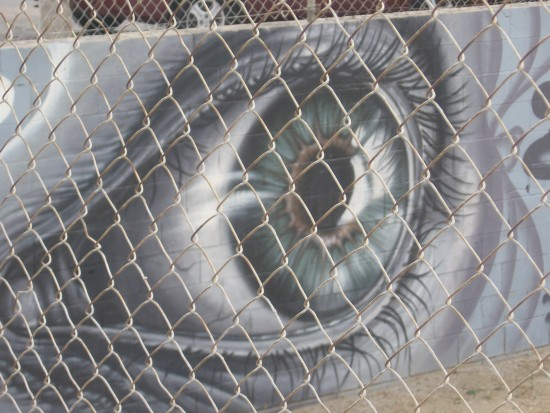 Large eye peers from behind chain link fence.