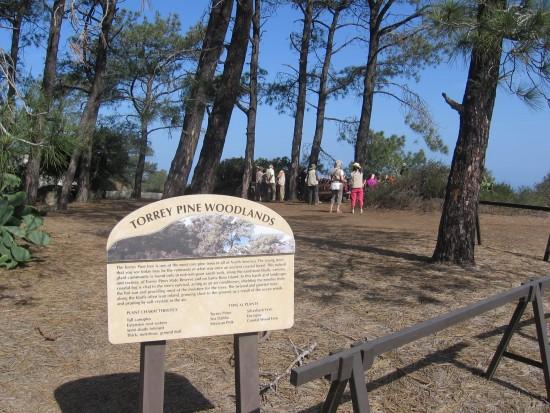 Sign behind Lodge describes Torrey pines woodlands.