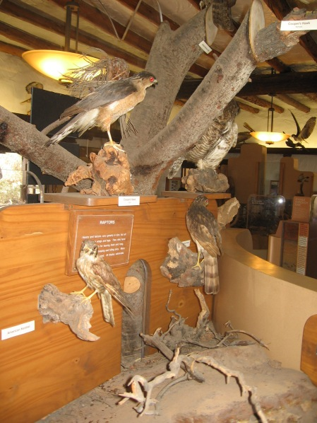 One of many exhibits in the visitor center.