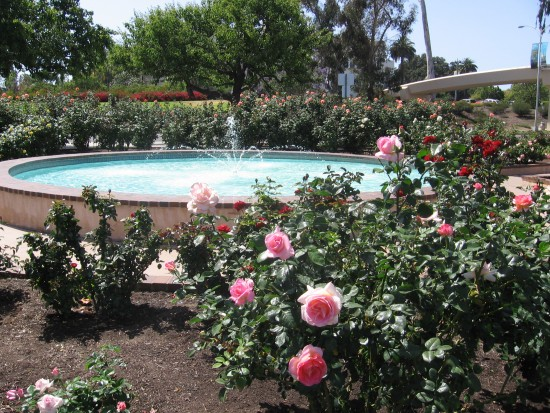 A fountain among the roses.