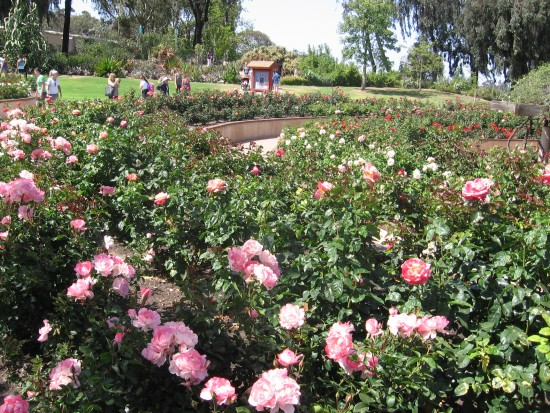 Mother's Day at the Balboa Park rose garden.