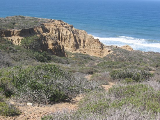 Typical scenery along trails of Torrey Pines State Reserve.