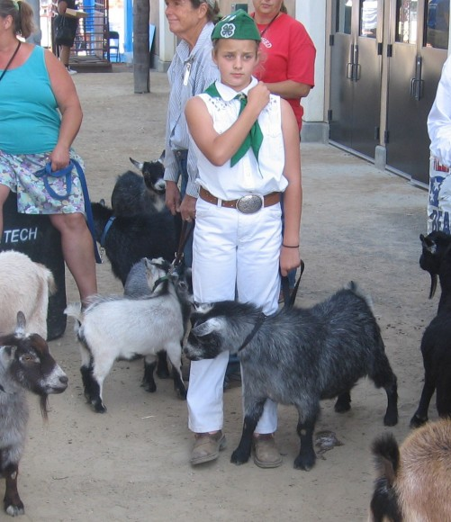 Young lady looks worried as she prepares to show her goat.