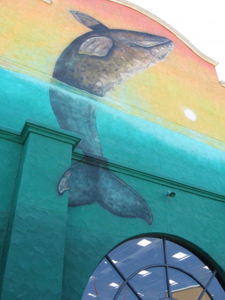Wall of the Wyland Center has a cool whale mural.