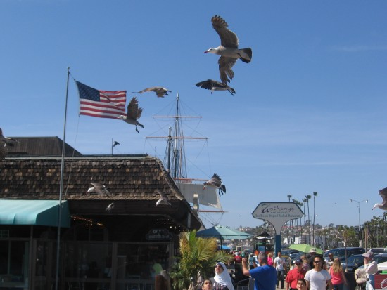 Gulls take flight by American flag on Embarcadero.