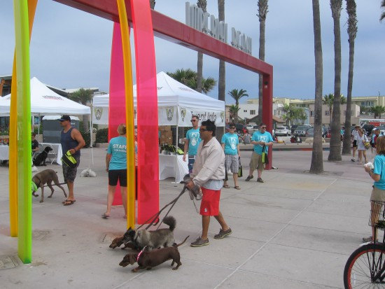 Dogs and their human pals arrive at the big surfing competition.