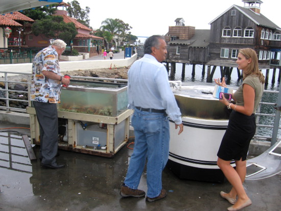 County Supervisor Greg Cox checks out a tank full of crabs.