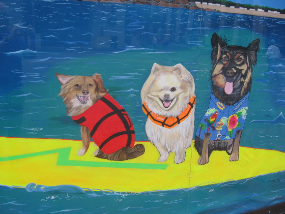 These three happy dogs are sharing a surfboard!