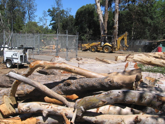 Trees cut down, making way for new road to a long-planned parking area.