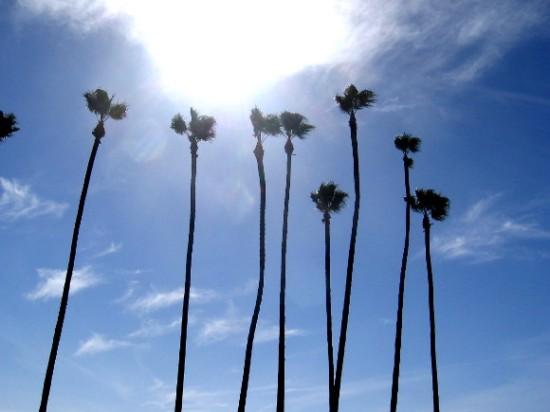 Tall palms reach toward a glowing cloud on San Diego's Embarcadero.