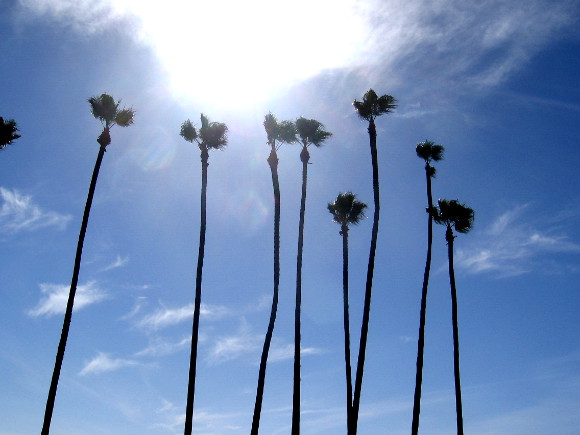 Tall palms reach toward a glowing cloud on San Diego's Embarcadero.