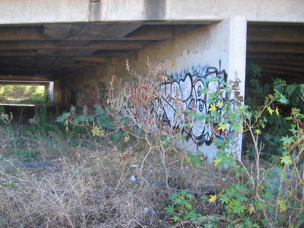 Weeds and graffiti beneath the concrete.