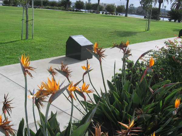 Beautiful bird of paradise flowers along pathway through 52 Boats Memorial.