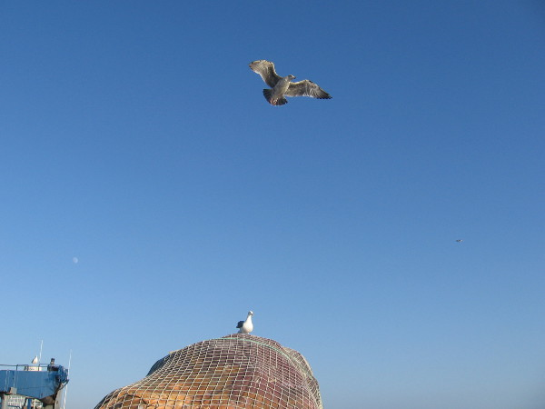 Seagull flies off tall mound of fishing nets while another gull watches.