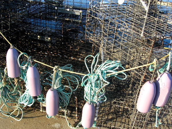 Purple floats strung on colorful rope across traps on pier.