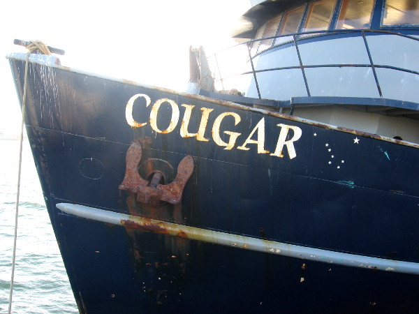 Cougar tied to pier between hunts for small fish.