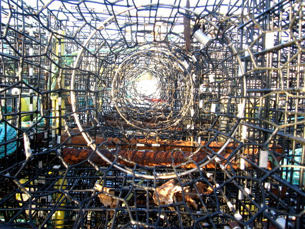 Cool pic through a long, complex row of lobster traps.