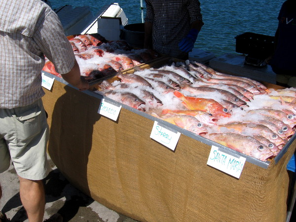 Lots of colorful rockfish including starry, Bocaccio and Santa Maria.