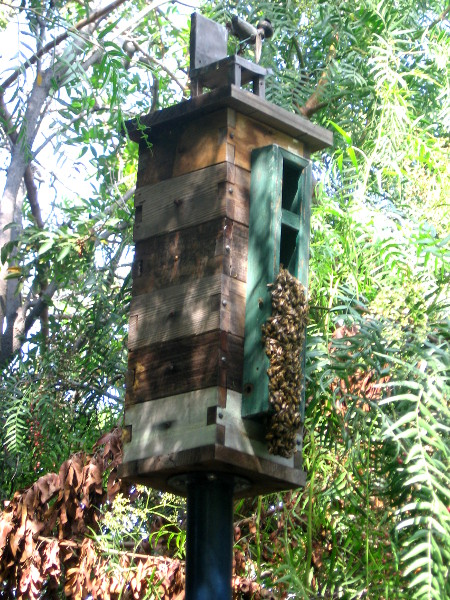 Bees have taken over this wooden birdhouse.