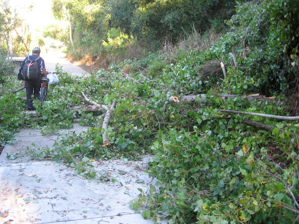 Popular pathway through Mission Valley is covered with miles of fallen trees.