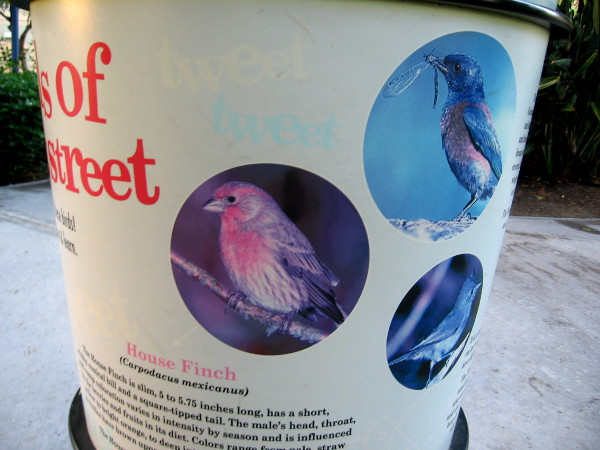 House finches are among the birds that visit the Tweet Street park.