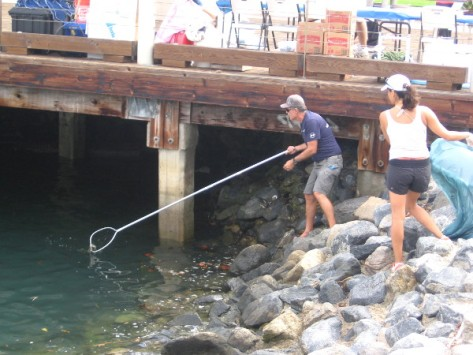 Pool skimming nets were handy for removing floating litter and debris.