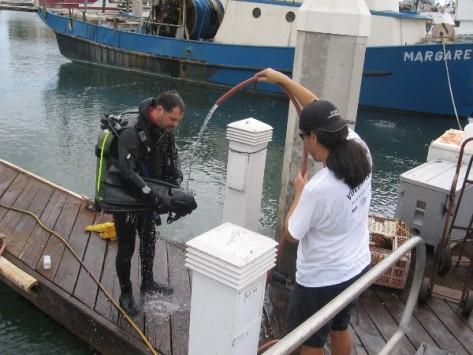 Scuba diver gets hosed off on Tuna Harbor dock after gathering trash.