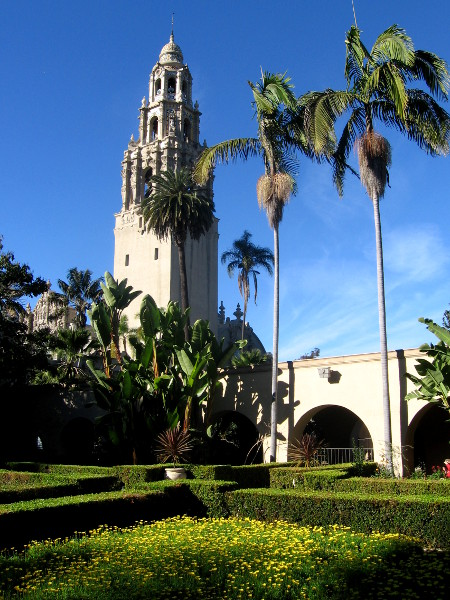 The California Tower and palm trees rise into blue sky.