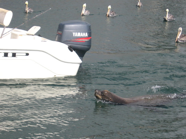 And look who else is tagging along--it's Wally the sea lion!