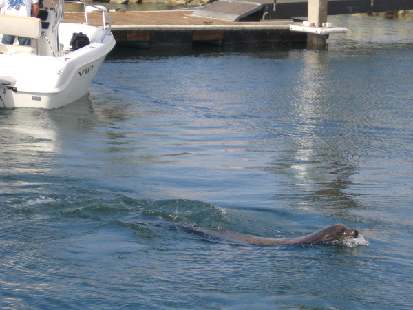 Wally spots some new arrivals coming into the little boat ramp area.